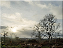 NH6454 : The height of the midday sun - Christmas Day by Julian Paren