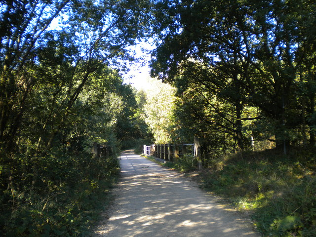 Railway bridge in Sansom Wood