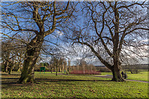 TQ3095 : Large Oak Trees, Oakwood Park, London N14 by Christine Matthews