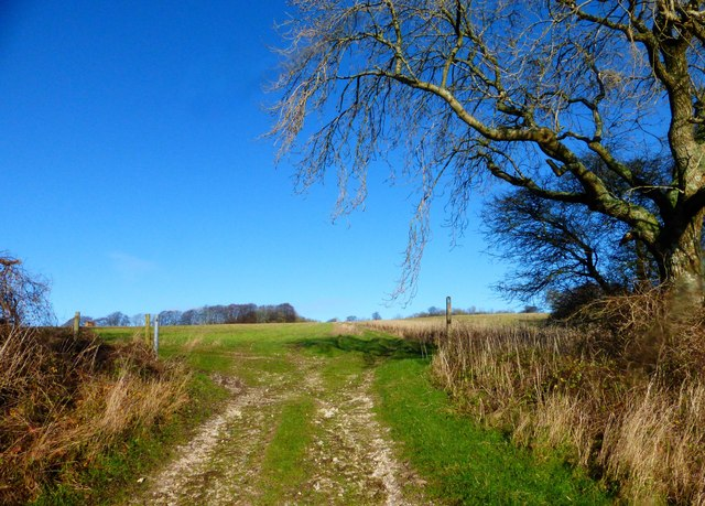 Bridleway crosses field boundary on North Down