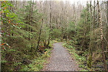 NX4465 : Kirroughtree Forest Trail by Billy McCrorie
