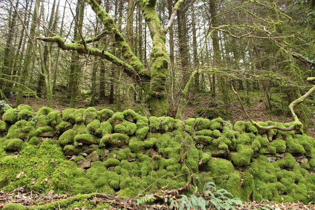 Kirroughtree Forest, Moss Covered Stane Dyke