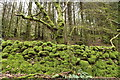 NX4465 : Kirroughtree Forest, Moss Covered Stane Dyke by Billy McCrorie