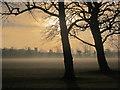 SE3054 : Mist on The Stray by Derek Harper