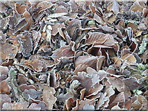 SU2913 : Frosted leaves by Val Pollard