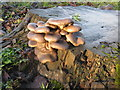 SK3499 : Fungi in the wet! by Dave Pickersgill