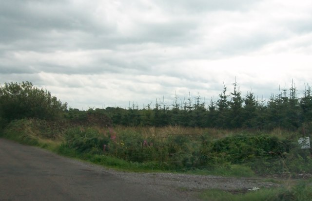 Afforestation on worked-out sections of bogland near Gahagan's Village, Co Offaly