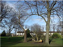 TQ7868 : Storm damage in St Mary's Cemetery by David Anstiss