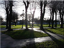 TQ7868 : Shadows, trees and sunlight by David Anstiss