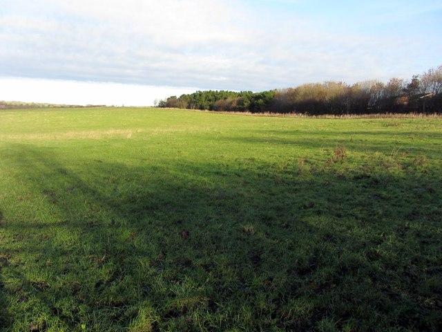 Pasture north of North Walbottle Road