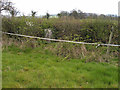 SO4127 : Hedge with trig point by Trevor Littlewood