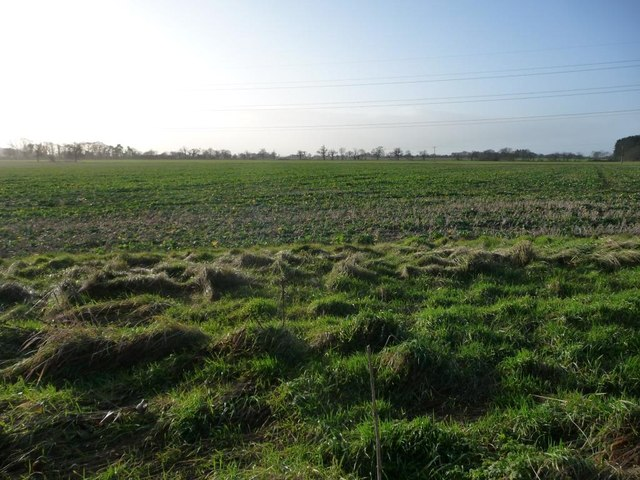 Uncultivated field margin, south of Bar Lane