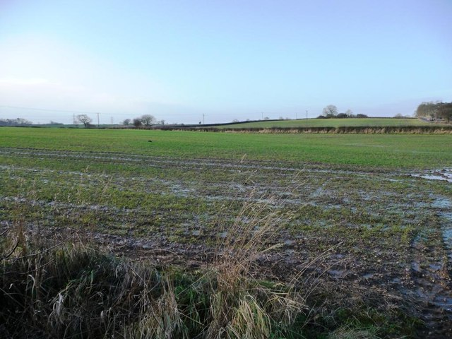 Field with issues, west of Bar Lane