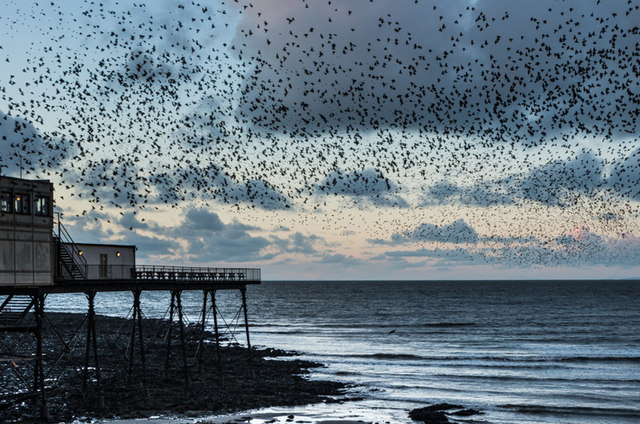 Starlings over Aberystwyth Pier
