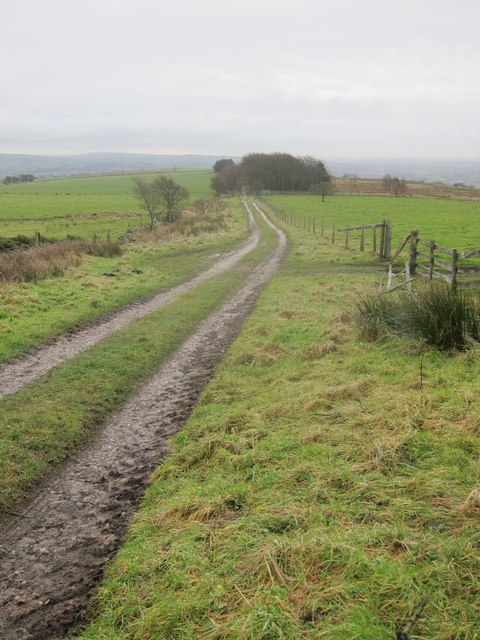 The farm track & footpath running downhill into Gun Plantation