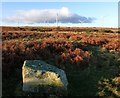 NU1325 : Cup-and-ring-marked rock on Wandylaw Moor by Russel Wills