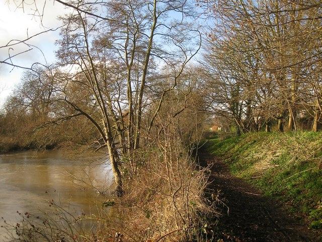 Alders by the Avon, Emscote Gardens, Warwick 2014, January 7