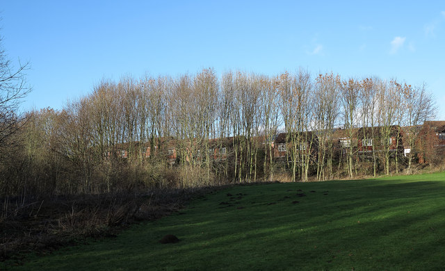 Trees with housing of Briarfield beyond