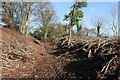 SU4827 : Tree felling on St. Catherine's Hill by Peter Facey