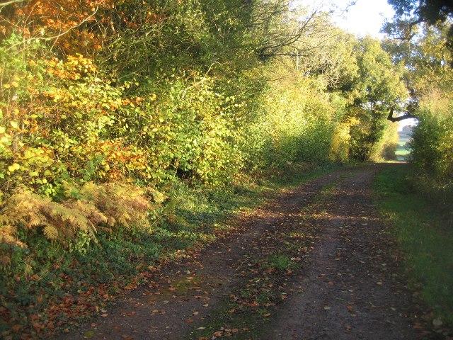 Farm track / footpath by Sandy B