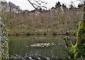 SK2998 : Pond above Stocksbridge, below Whancliffe Crags by Chris Morgan