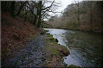 SX4970 : River Walkham by jeff collins