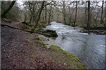 SX4970 : River Walkham by jeff collins