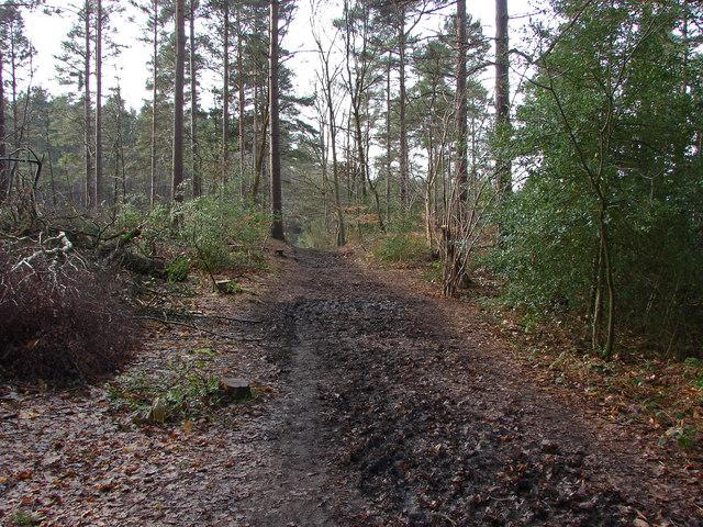 Bridleway, Edgbarrow Woods