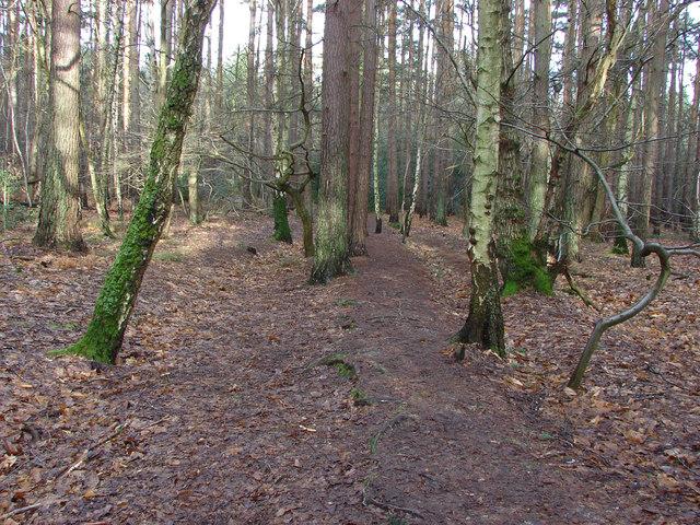 Edgbarrow Woods