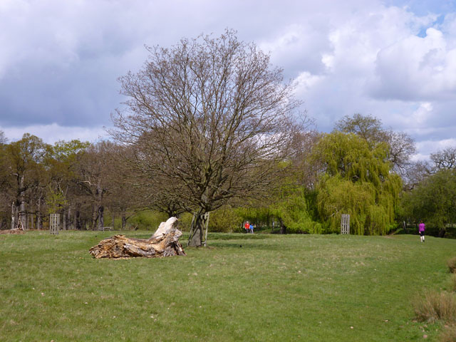 In Richmond Park