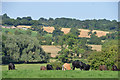 SK6647 : Looking towards Gonalston back lane from fields at end of Mount Pleasant Lowdham by Joy Newbould