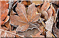 J3773 : Frosty leaves, Belfast by Albert Bridge