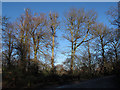 TQ4376 : Winter trees on Eltham Common by Stephen Craven