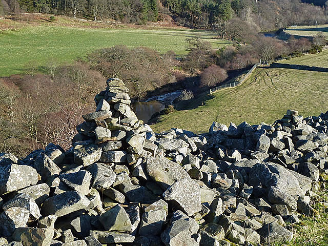 A collapsed drystane dyke
