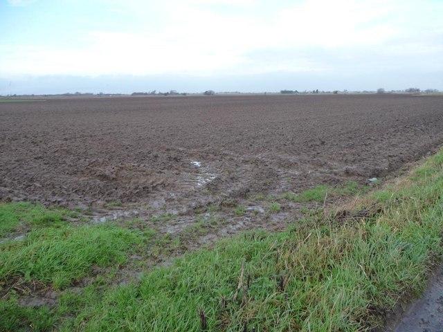 South-east corner, Swinefleet and Reedness Moor