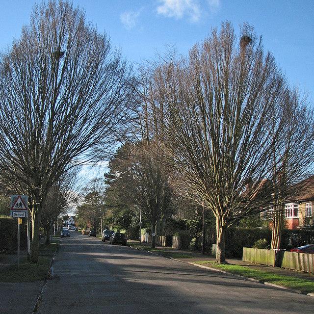 Glebe Road in January by John Sutton
