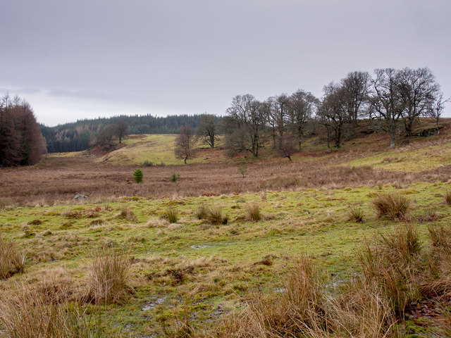 South of Rotmell Wood