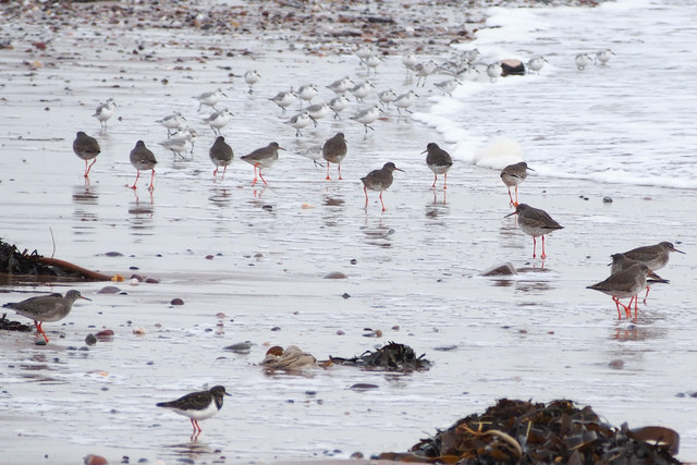 Waders at East Haven