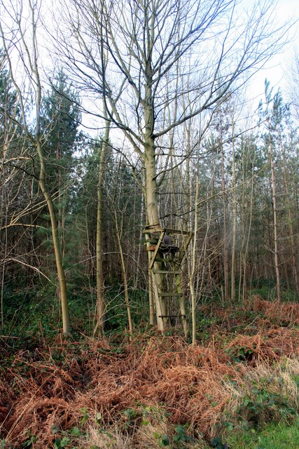 High chair in Scarcliffe Wood