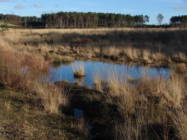 Temporary pond, Crowthorne Wood