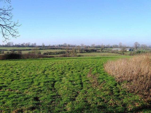 Fields north west of Dunton Lane by Alex McGregor