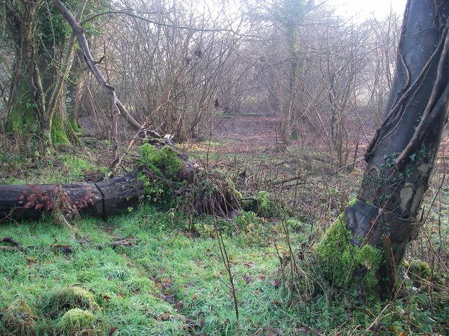 Killed Trees, 2