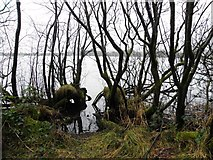 H5776 : Gnarled trees, Loughmacrory by Kenneth  Allen