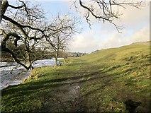 SE0063 : Dales Way above Linton Falls by Derek Harper