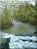 NZ4706 : River Leven above Hutton Rudby by Gordon Hatton