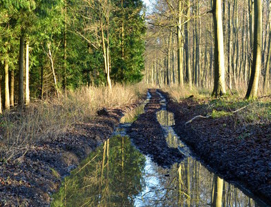 SU6578 : Woodland track after heavy rain, near Mapledurham, Oxfordshire by Edmund Shaw