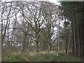 NT3360 : Baker's Avenue Wood, Arniston by M J Richardson