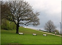 SD8304 : The hill to the Temple, Heaton Park by Tricia Neal