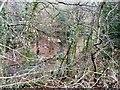SJ9795 : Longlands Wood by Gerald England
