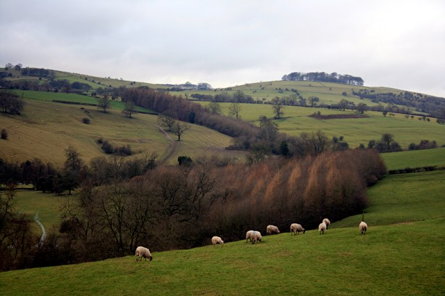 Sheep grazing in Dovedale